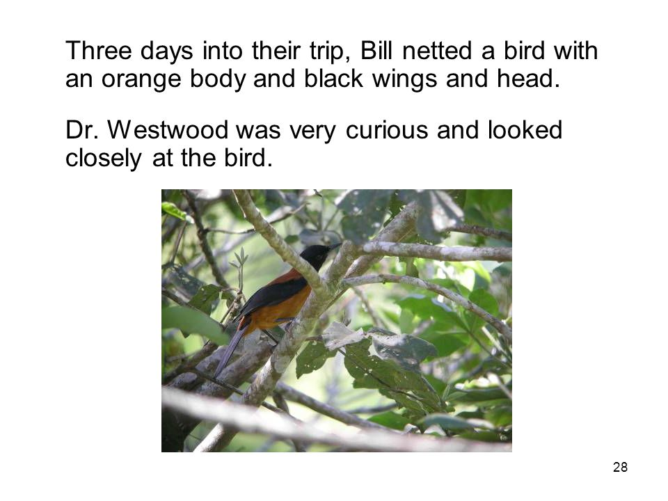 Three days into their trip, Bill netted a bird with an orange body and black wings and head.