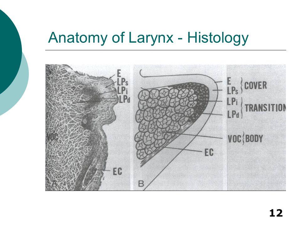 Anatomy of Larynx - Histology
