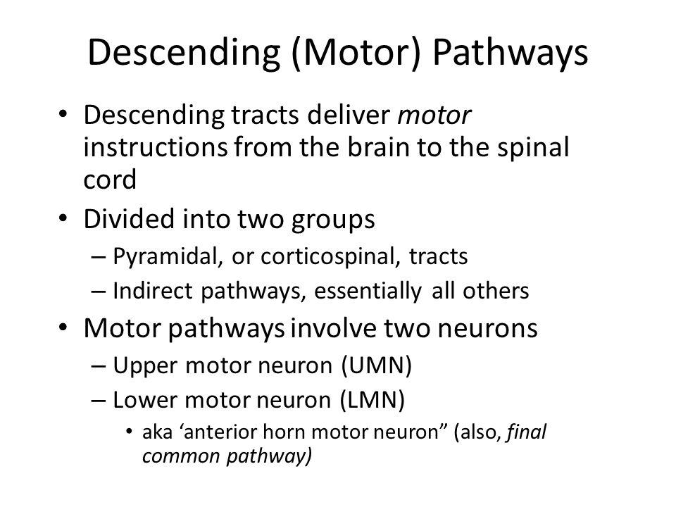 Descending (Motor) Pathways