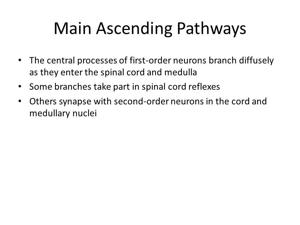 Main Ascending Pathways