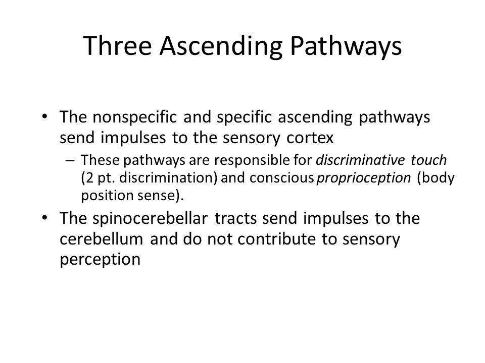 Three Ascending Pathways