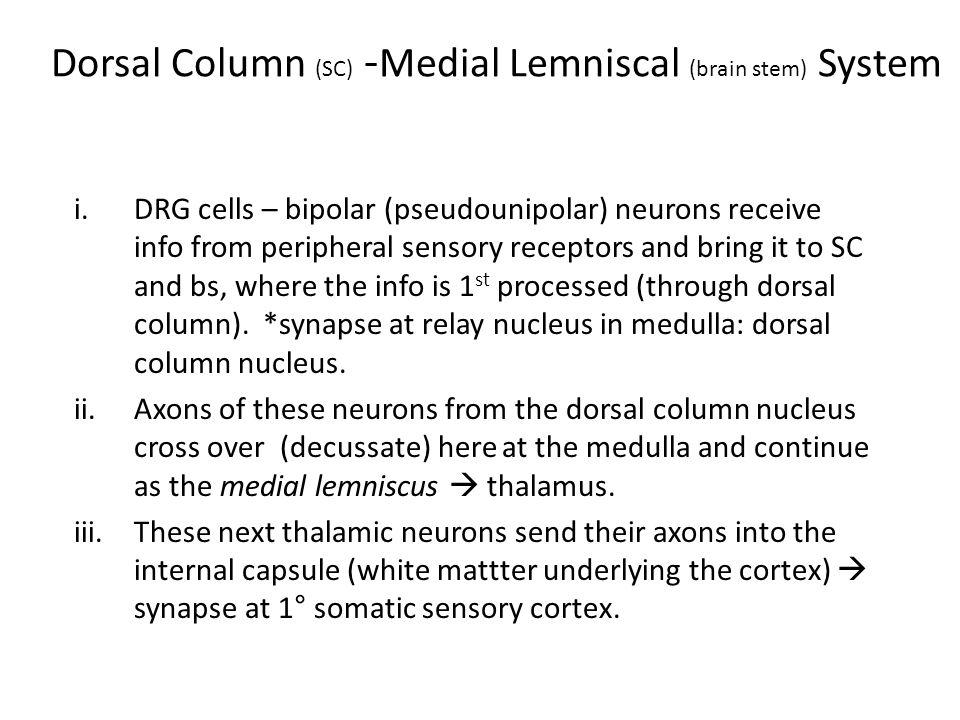 Dorsal Column (SC) -Medial Lemniscal (brain stem) System