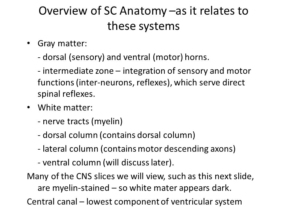 Overview of SC Anatomy –as it relates to these systems