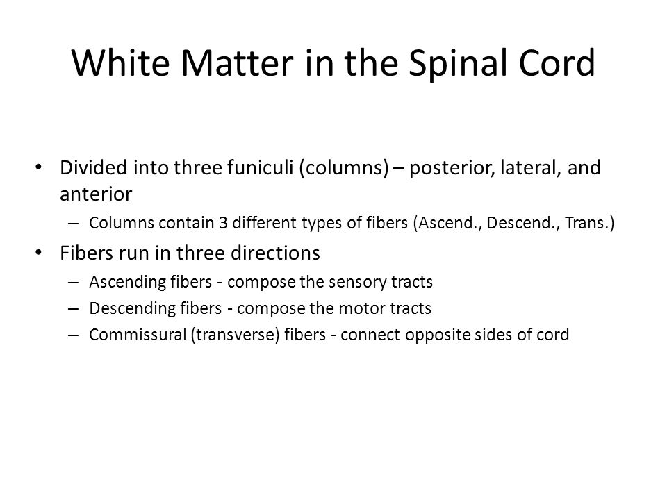 White Matter in the Spinal Cord