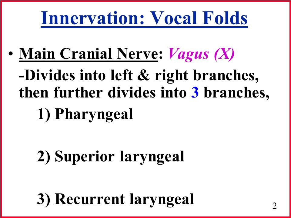 Innervation: Vocal Folds