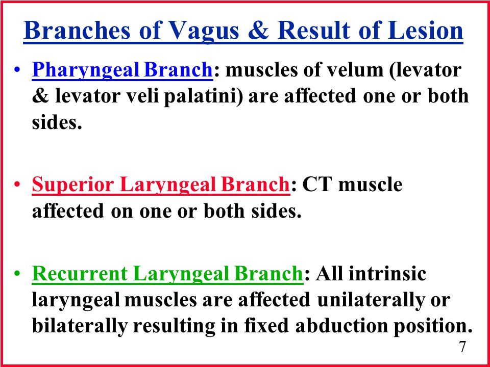 Branches of Vagus & Result of Lesion
