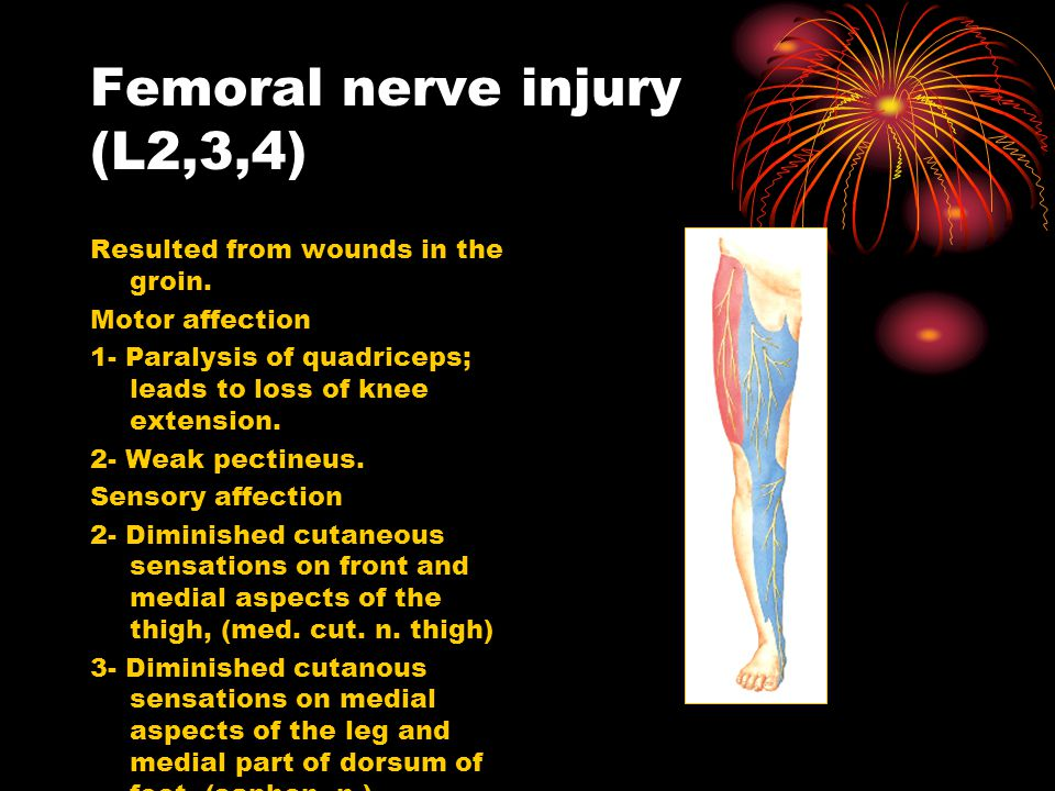 nerve injurys of lower limb - ppt video online download, Muscles