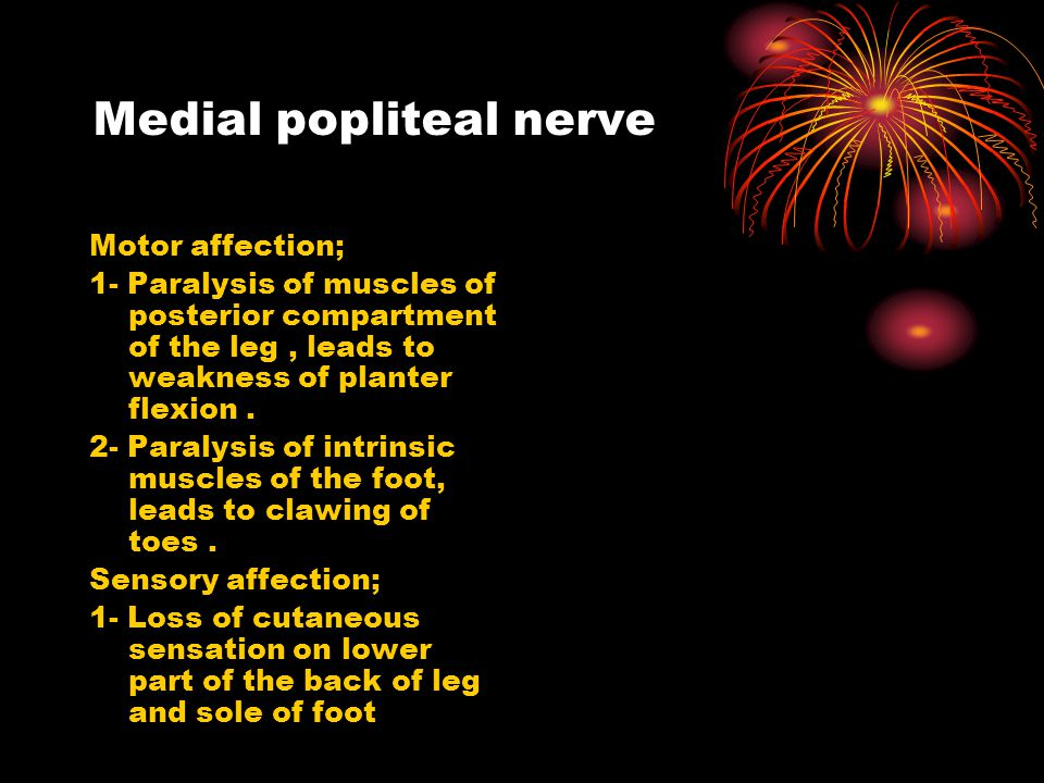Medial popliteal nerve
