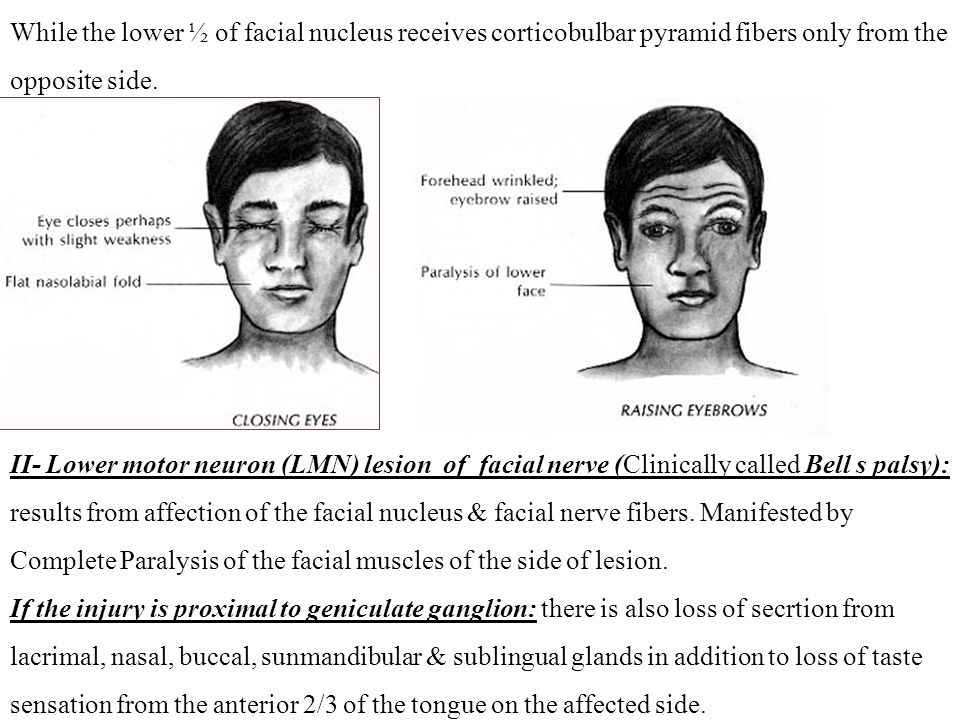 While the lower ½ of facial nucleus receives corticobulbar pyramid fibers only from the opposite side.