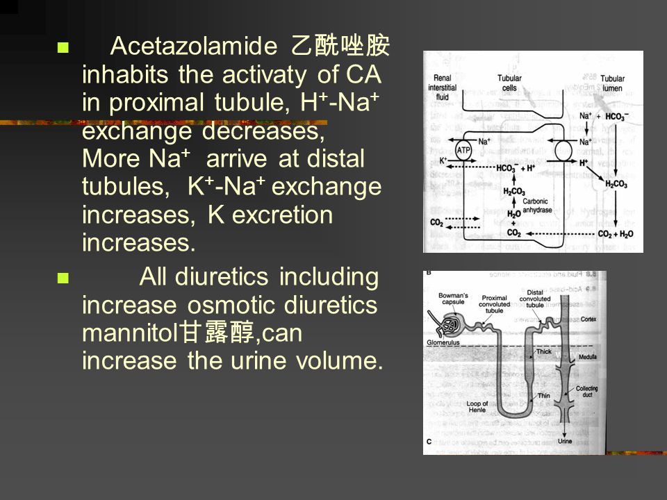 Acetazolamide 乙酰唑胺 inhabits the activaty of CA in proximal tubule, H+-Na+ exchange decreases, More Na+ arrive at distal tubules, K+-Na+ exchange increases, K excretion increases.