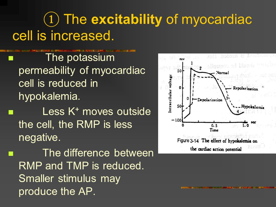 ① The excitability of myocardiac cell is increased.