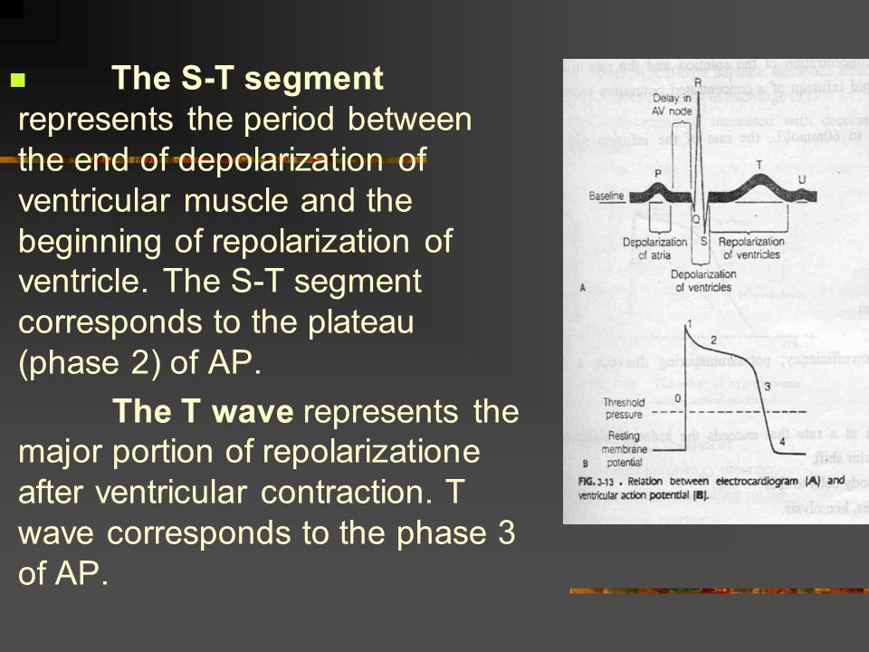 The S-T segment represents the period between the end of depolarization of ventricular muscle and the beginning of repolarization of ventricle. The S-T segment corresponds to the plateau (phase 2) of AP.