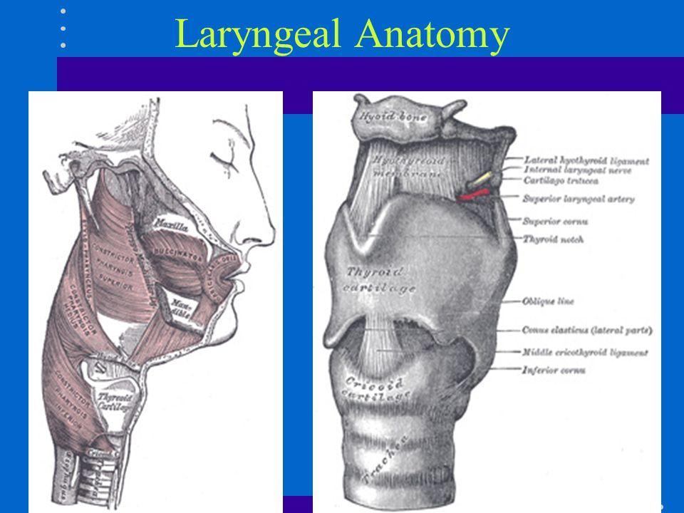 Erfreut Supraglottische Larynx Anatomie Galerie - Anatomie Ideen ...