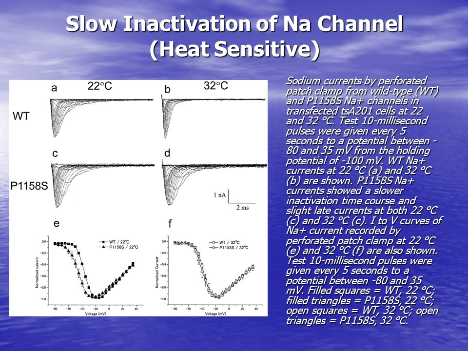 Slow Inactivation of Na Channel (Heat Sensitive)