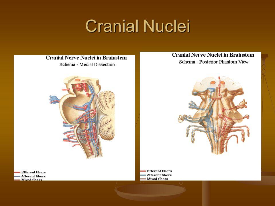 Cranial Nuclei