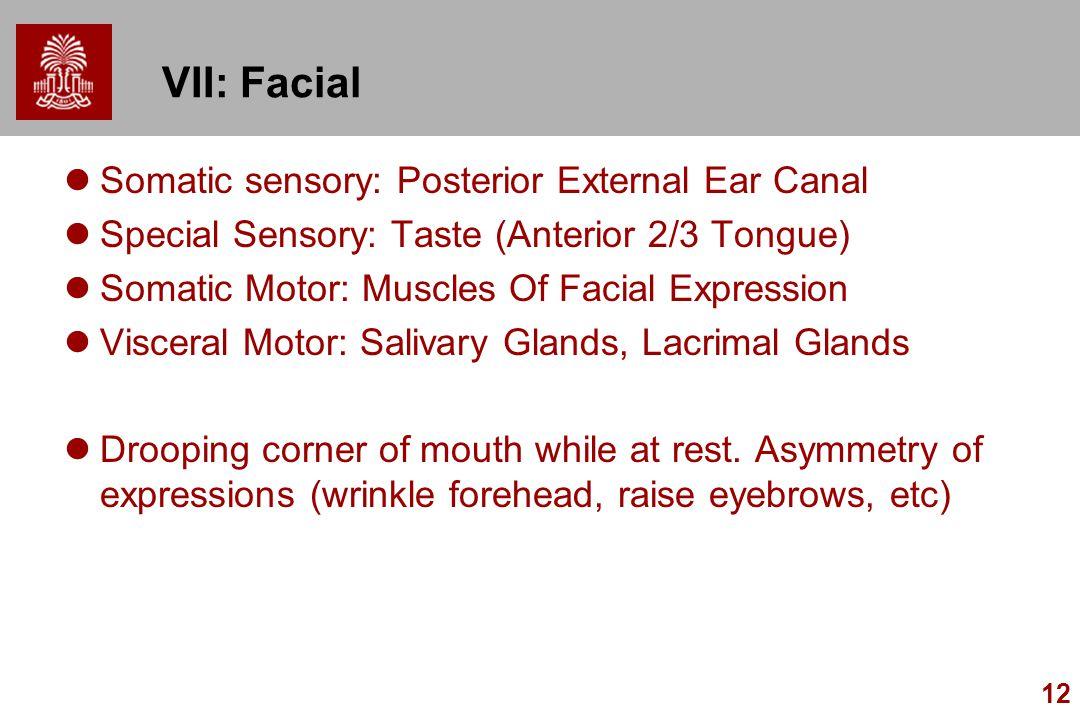 VII: Facial Somatic sensory: Posterior External Ear Canal