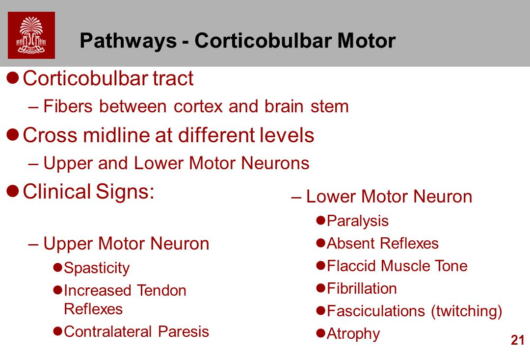 Pathways - Corticobulbar Motor