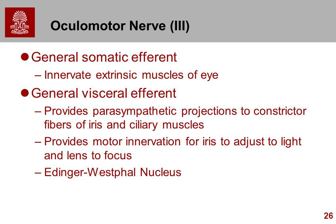 Oculomotor Nerve (III)