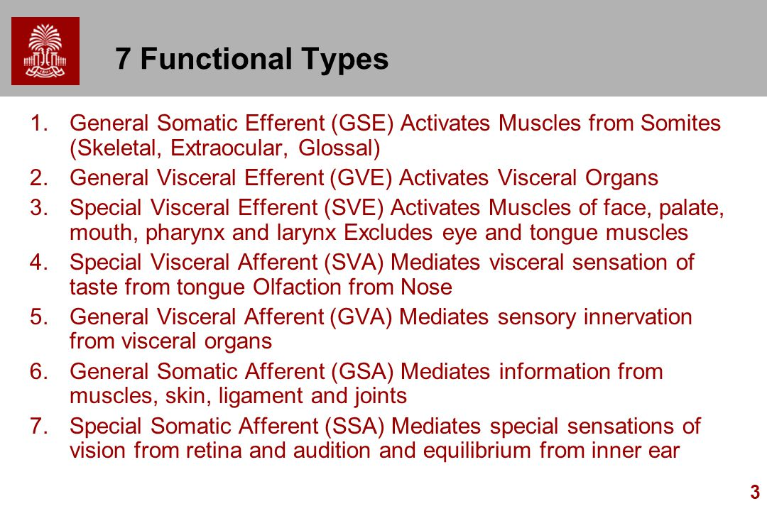 7 Functional Types General Somatic Efferent (GSE) Activates Muscles from Somites (Skeletal, Extraocular, Glossal)