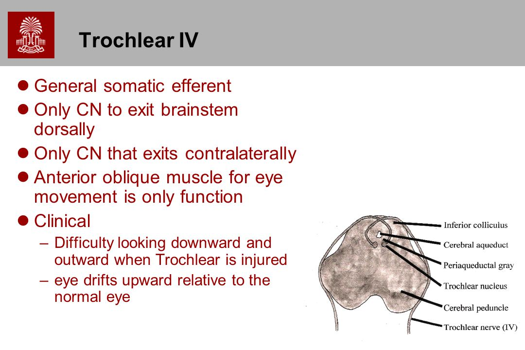 Trochlear IV General somatic efferent