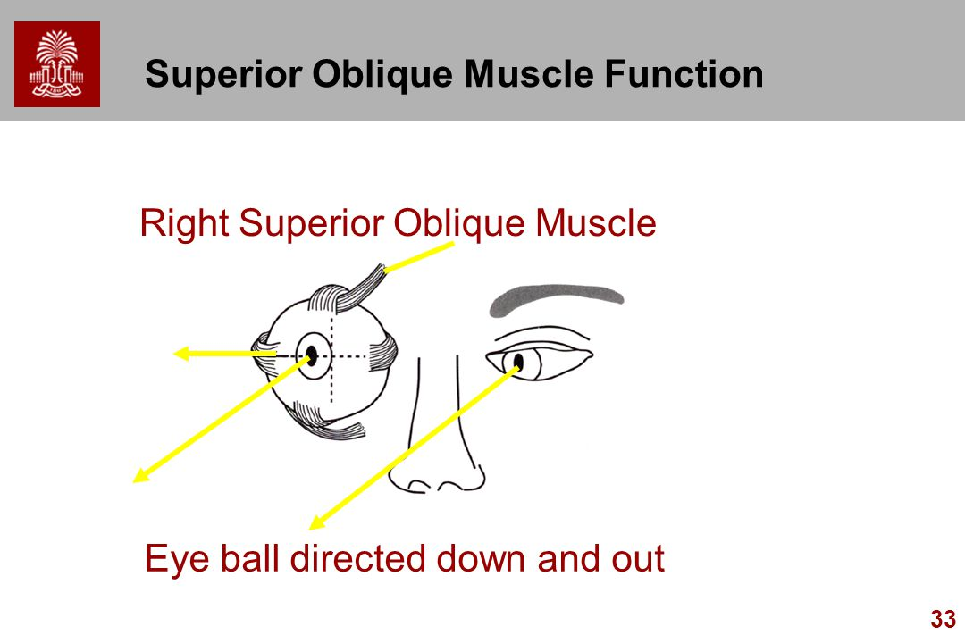 Superior Oblique Muscle Function