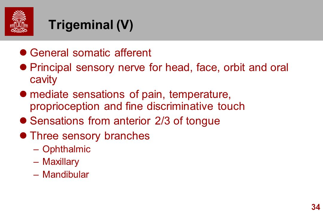 Trigeminal (V) General somatic afferent