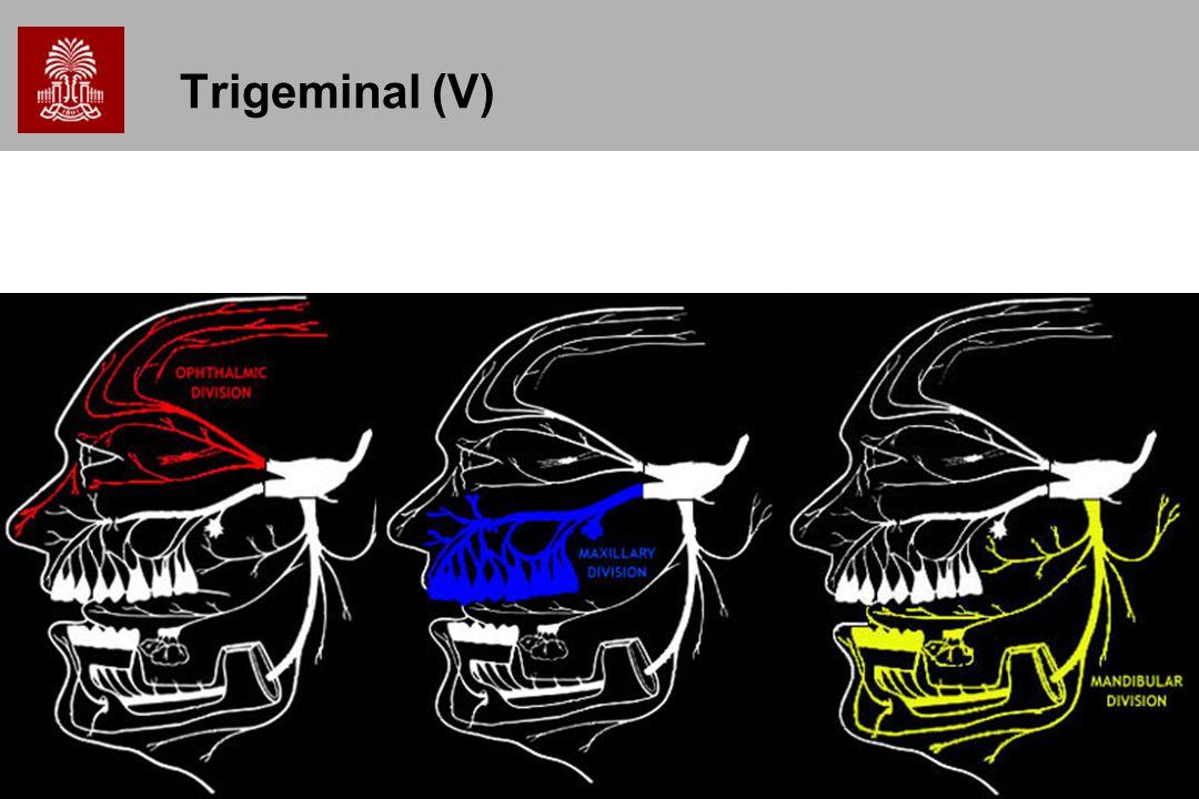 Trigeminal (V)