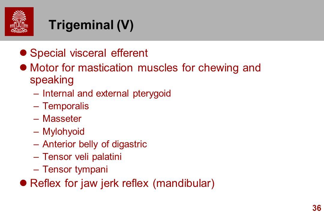 Trigeminal (V) Special visceral efferent