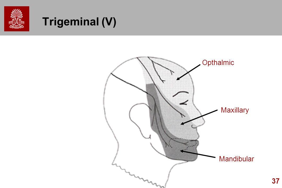 Trigeminal (V) Opthalmic Maxillary Mandibular
