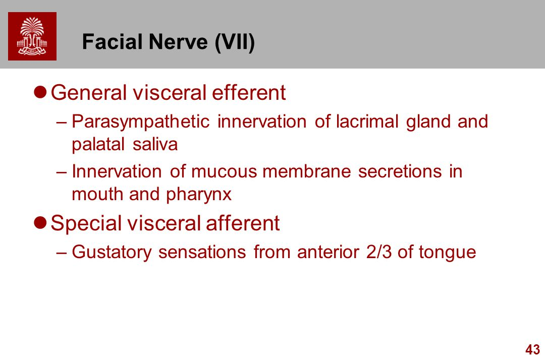 General visceral efferent