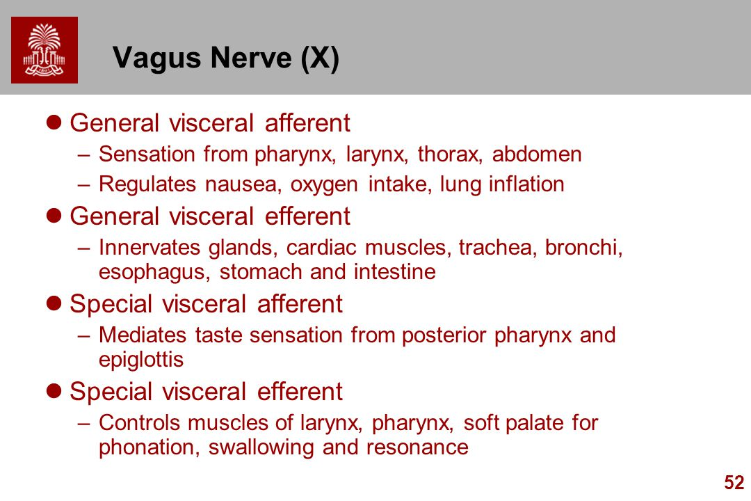Vagus Nerve (X) General visceral afferent General visceral efferent