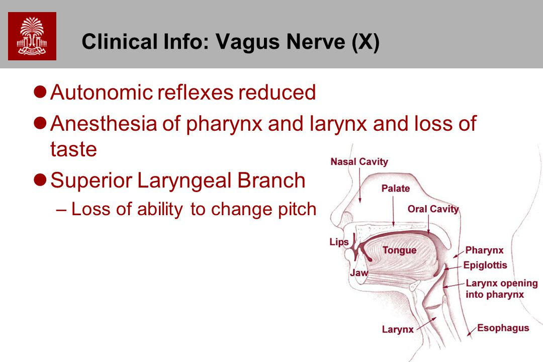 Clinical Info: Vagus Nerve (X)