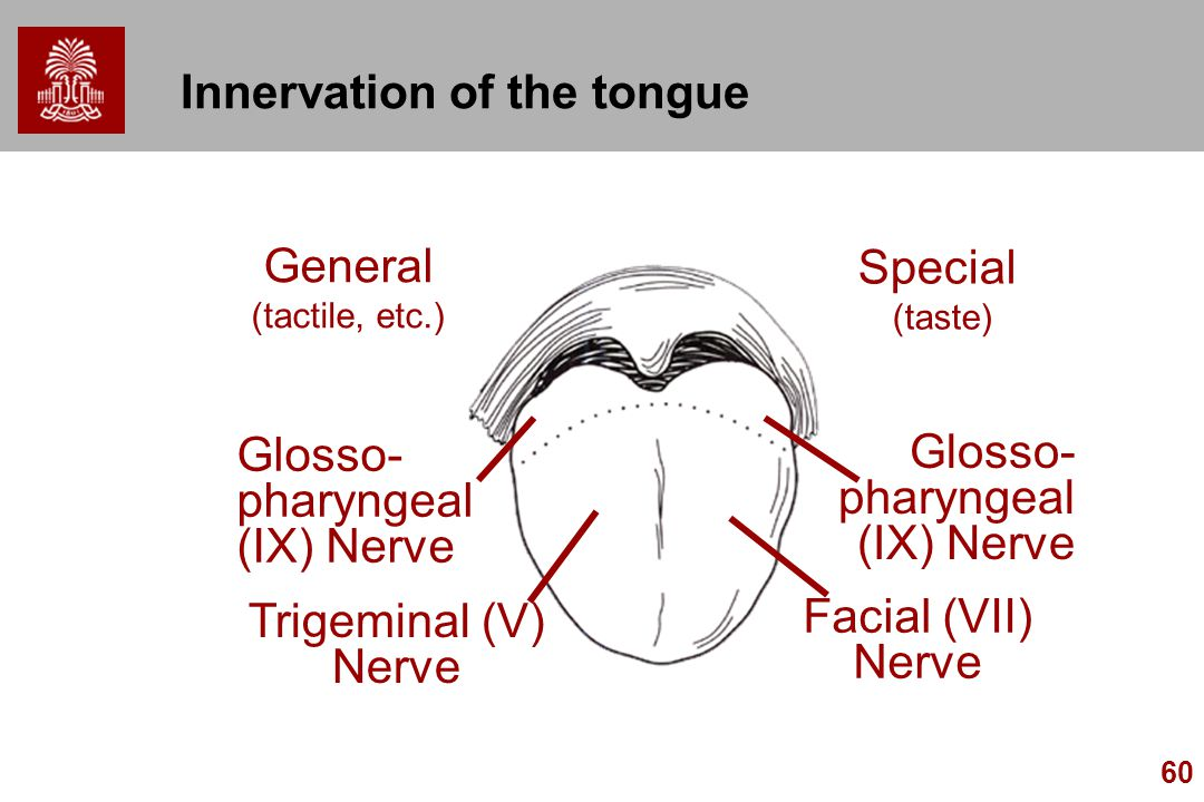 Innervation of the tongue