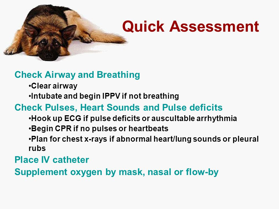Quick Assessment Check Airway and Breathing