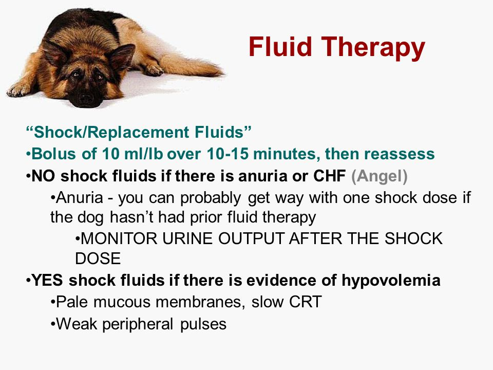 Fluid Therapy Shock/Replacement Fluids