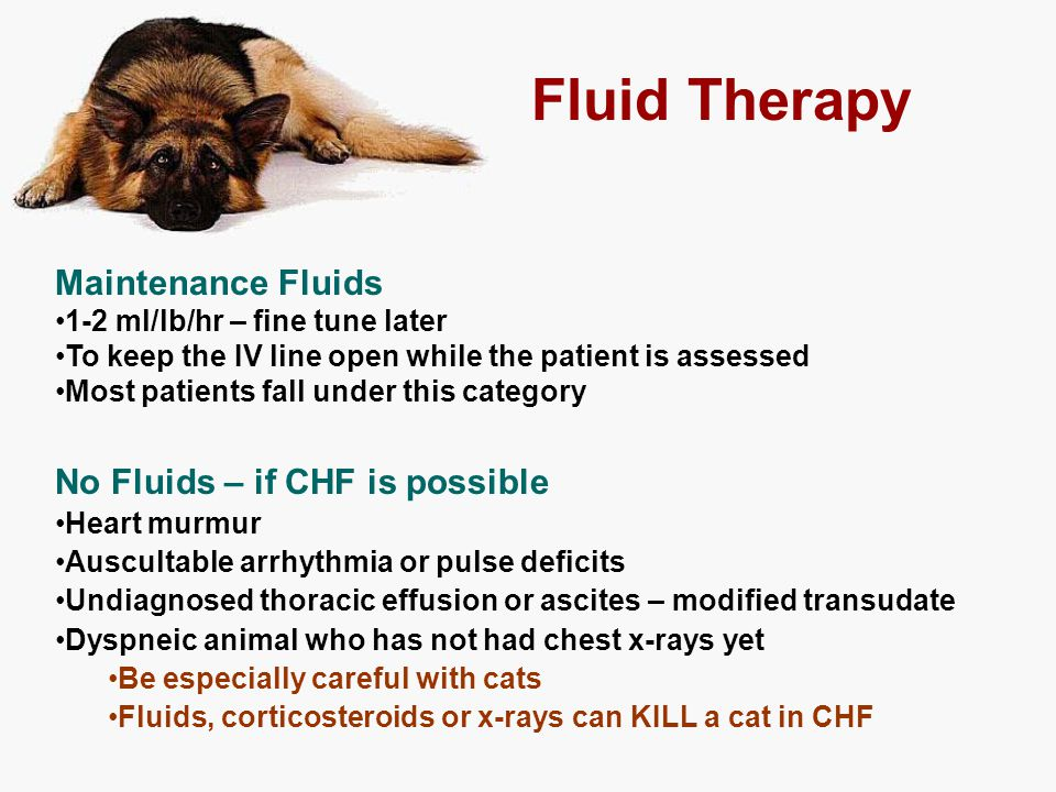 Fluid Therapy Maintenance Fluids No Fluids – if CHF is possible