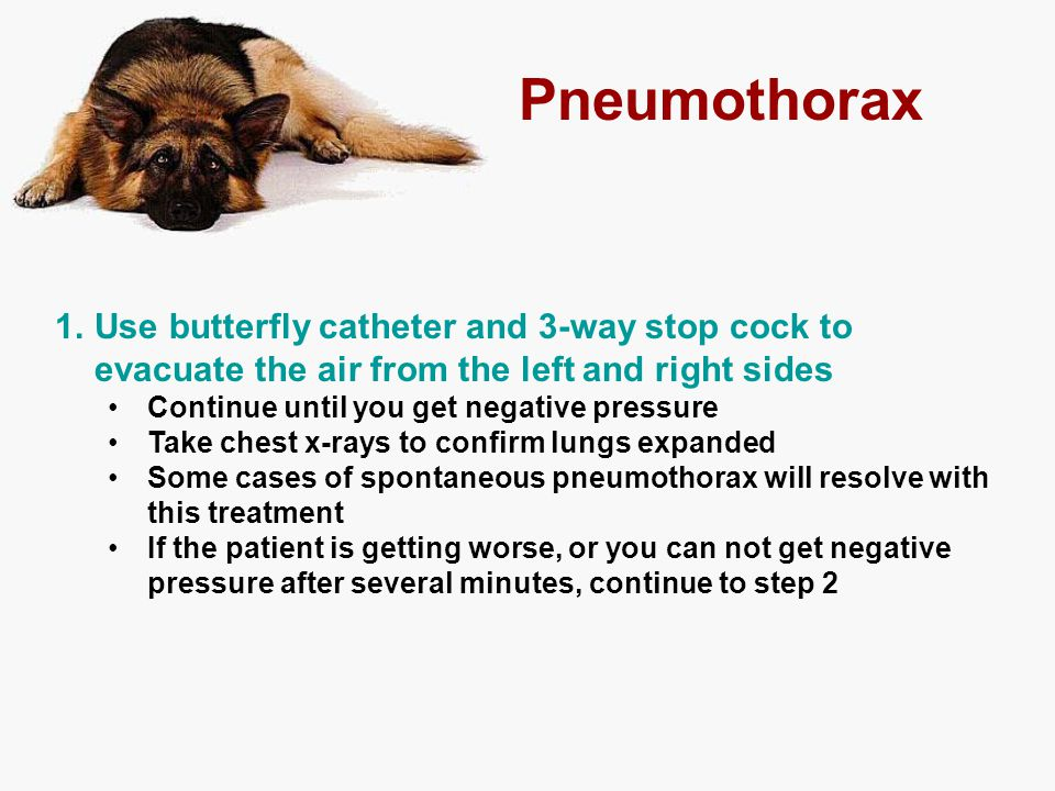 Pneumothorax Use butterfly catheter and 3-way stop cock to evacuate the air from the left and right sides.