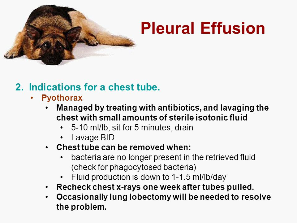 Pleural Effusion 2. Indications for a chest tube. Pyothorax