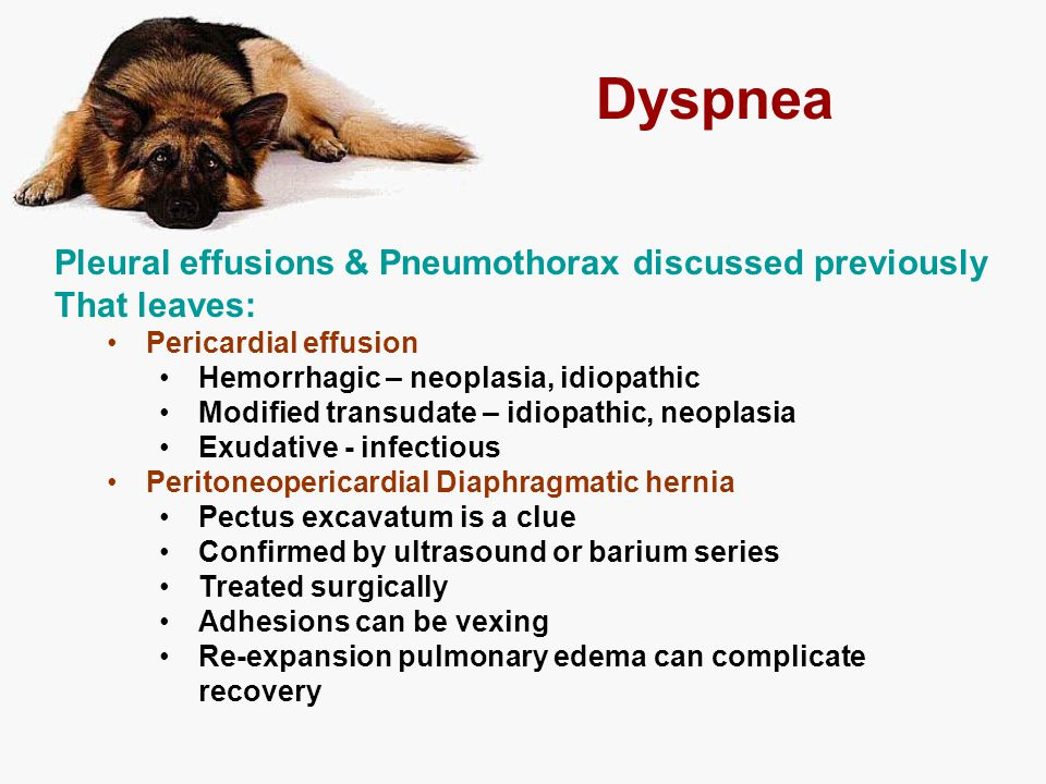 Dyspnea Pleural effusions & Pneumothorax discussed previously