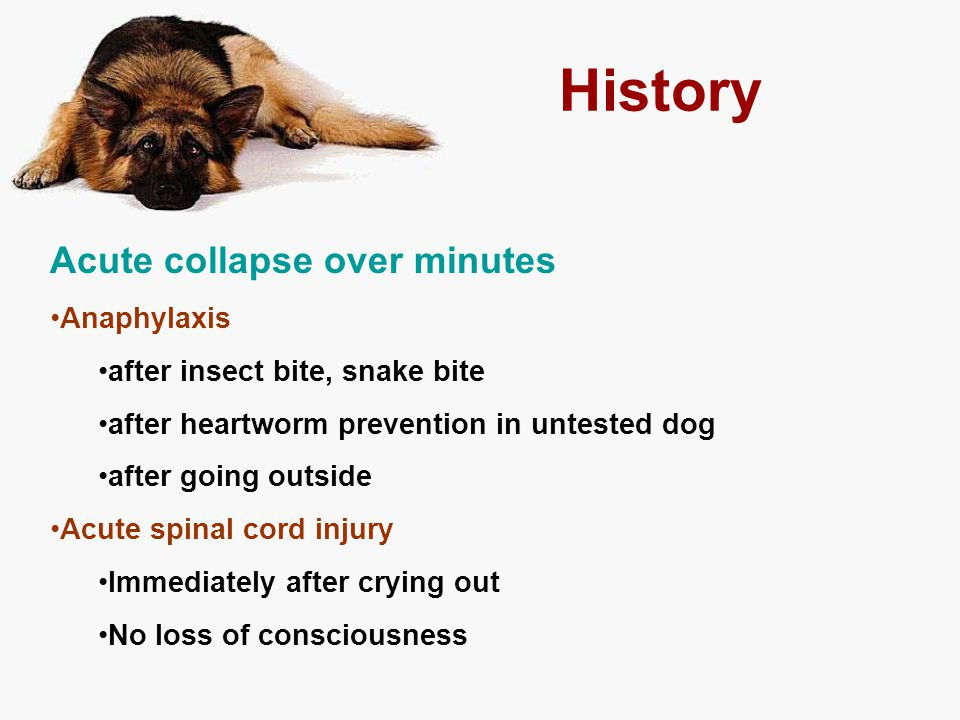 History Acute collapse over minutes Anaphylaxis