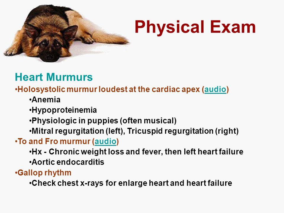 Physical Exam Heart Murmurs