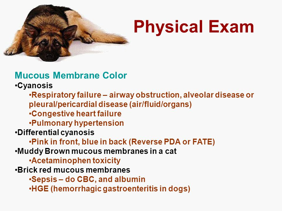 Physical Exam Mucous Membrane Color Cyanosis