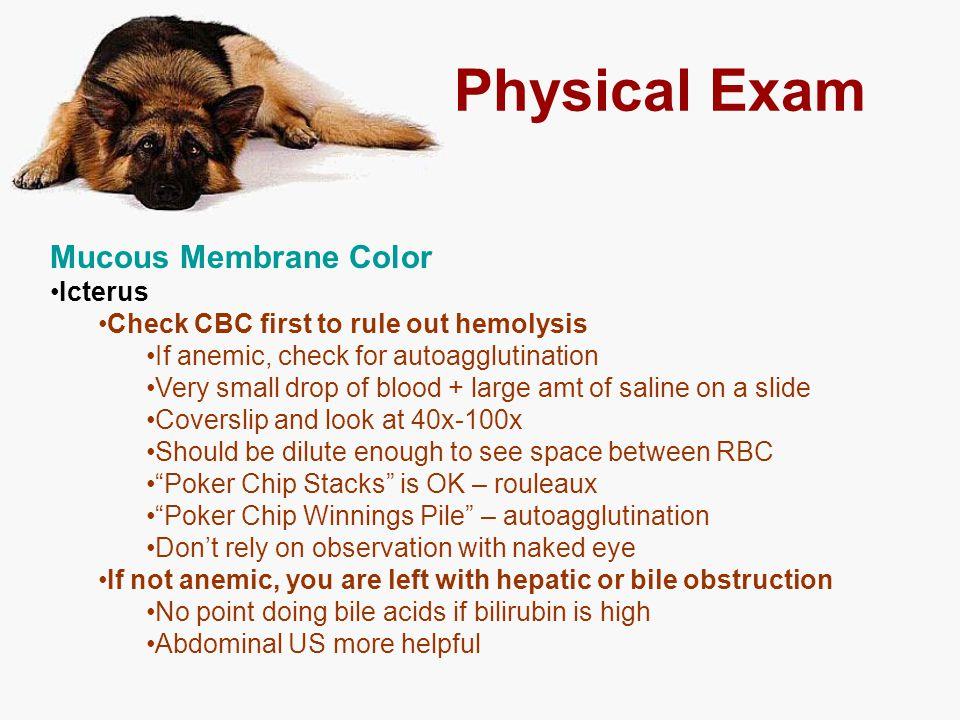 Physical Exam Mucous Membrane Color Icterus