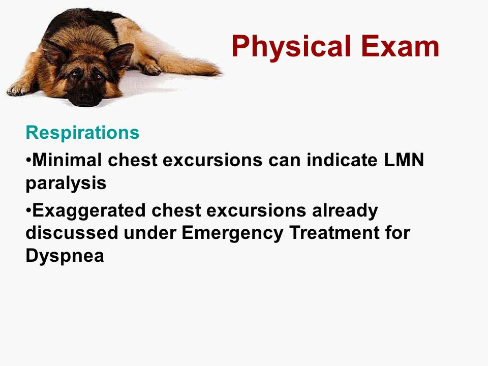 Physical Exam Respirations