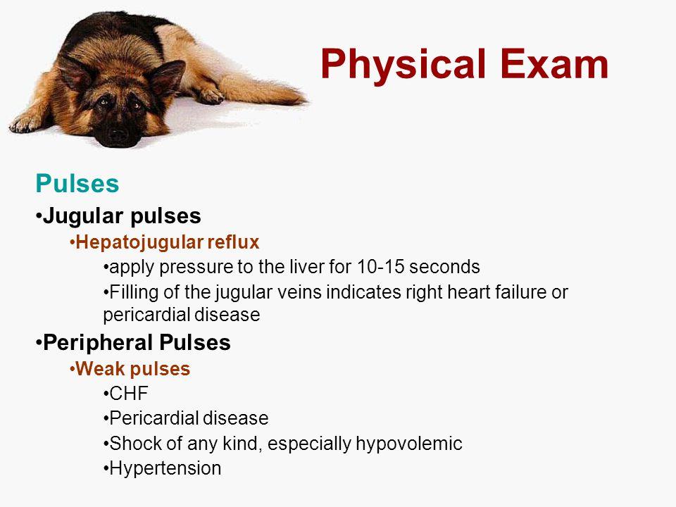 Physical Exam Pulses Jugular pulses Peripheral Pulses