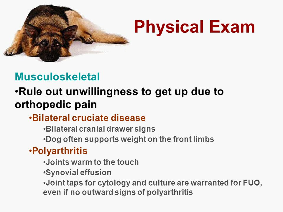 Physical Exam Musculoskeletal