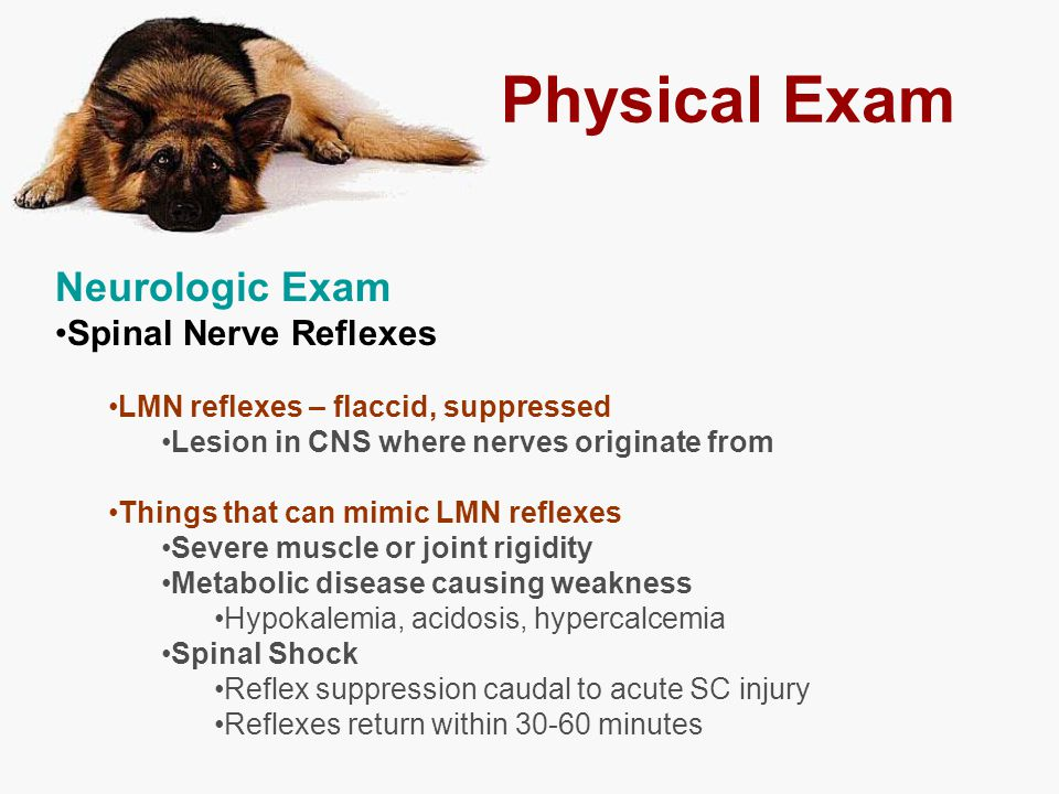 Physical Exam Neurologic Exam Spinal Nerve Reflexes