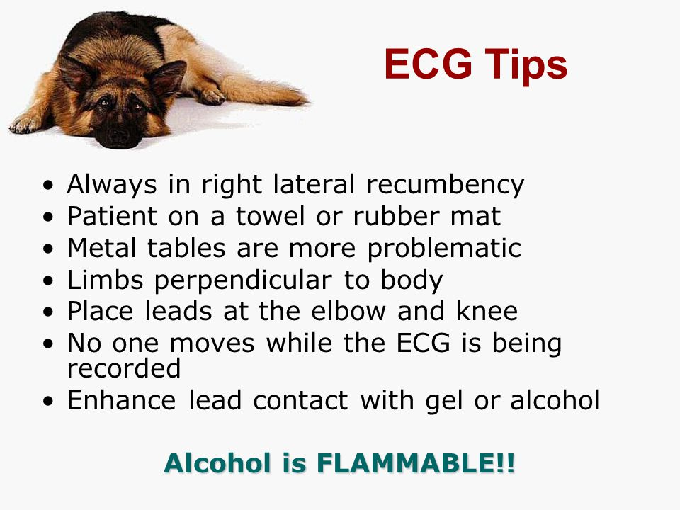 ECG Tips Always in right lateral recumbency