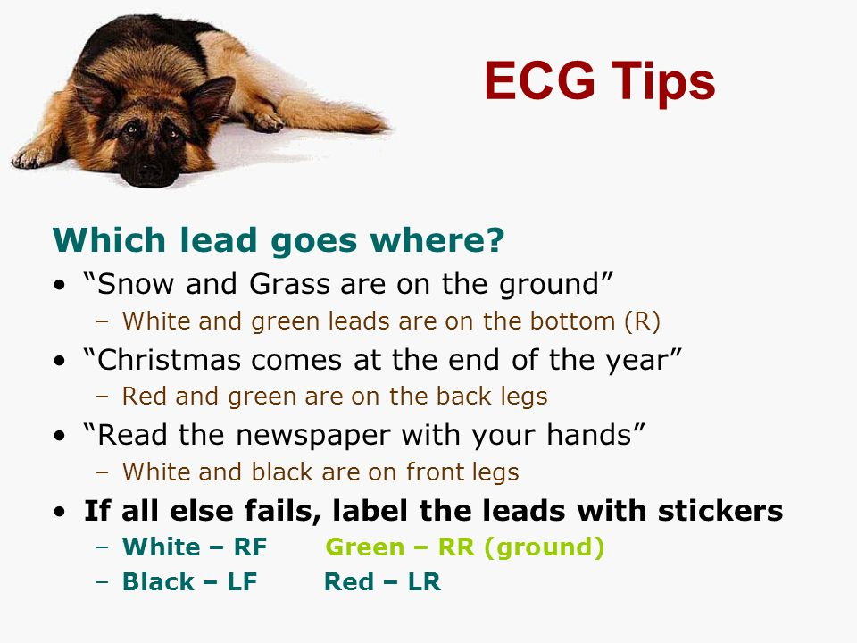ECG Tips Which lead goes where Snow and Grass are on the ground