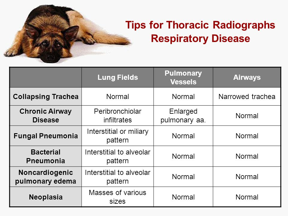 Tips for Thoracic Radiographs Respiratory Disease
